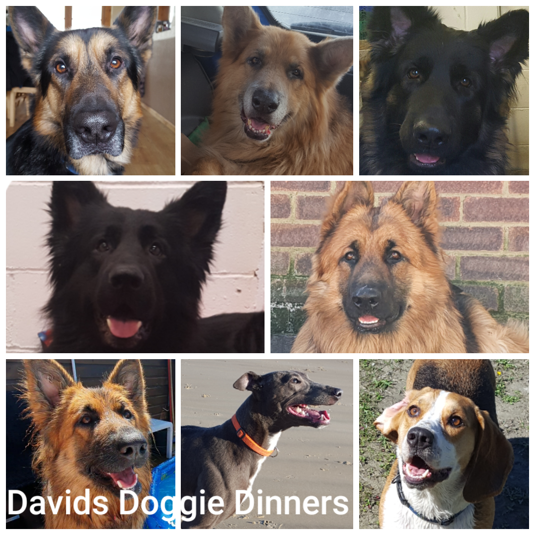 Davids Doggie Dinners Ltd